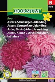 aster-strutsfjder--blandning-boa-1