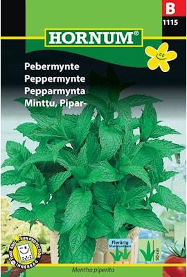 pepparmynta-1