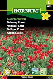vallmo-korn--summerdream-1