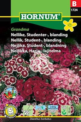 nejlika-student--blandning-grandma-1