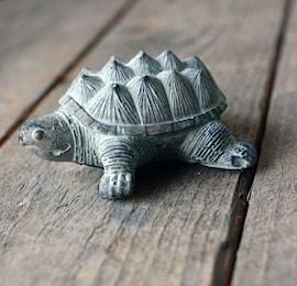 skldpadda-8x7x6h-cement-grn-1