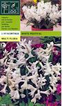 hyacint-white-festival-4