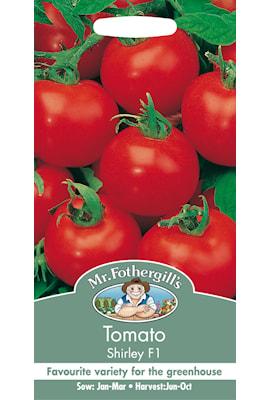 tomat-shirley-f1-1