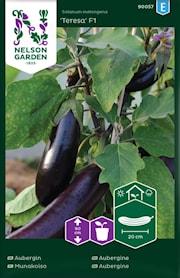 aubergin-teresa-f1-1