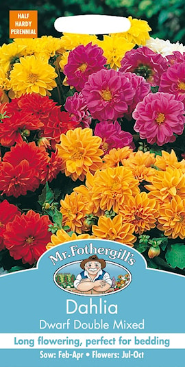 sommardahlia-dwarf-double-mixed-1