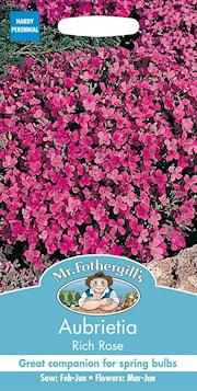 aubrietia-rich-rose-1