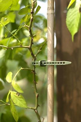 bindtrd-treefix-s-10-p-1