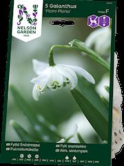 fylld-sndroppe-flore-pleno-5st-1