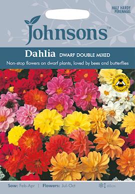 sommardahlia-dwarf-double-mixed-1