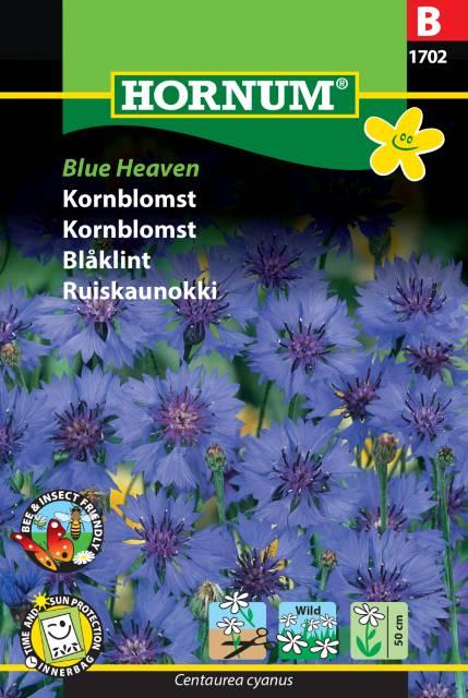Blåklint Blue Heaven