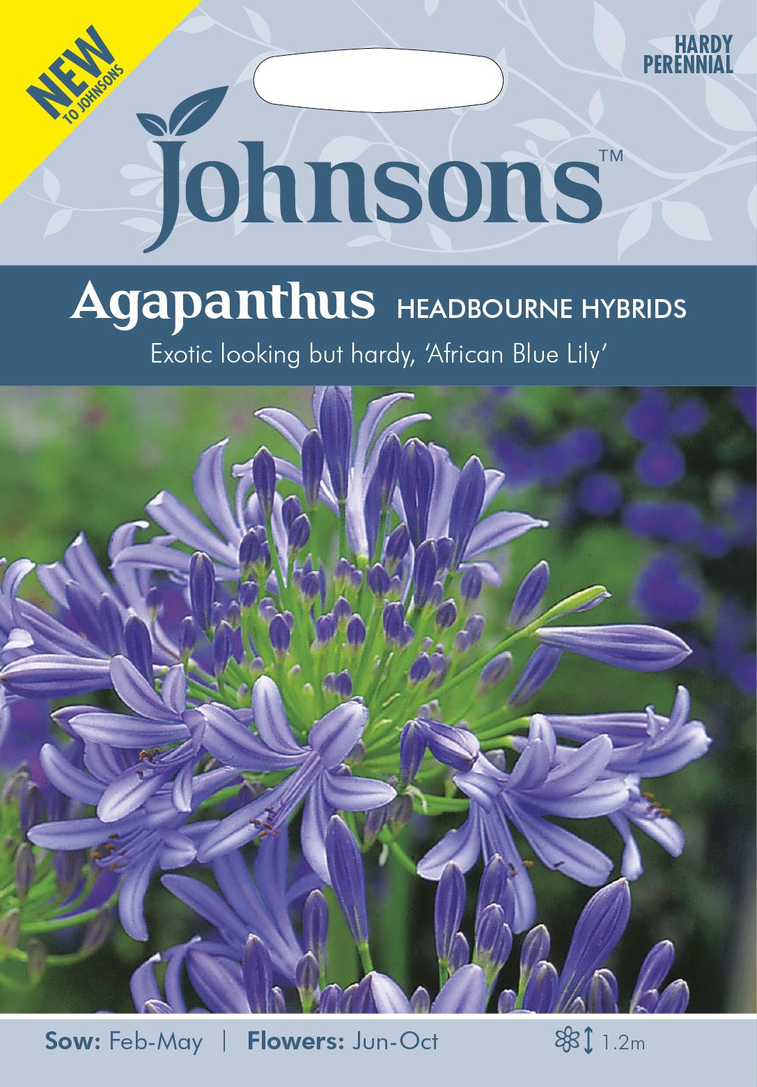 Afrikas blå lilja 'Headbourne Hybrids