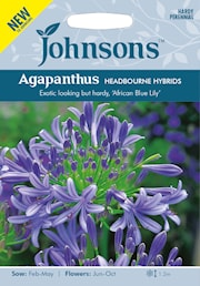 afrikas-bl-lilja-headbourne-hybrids-1