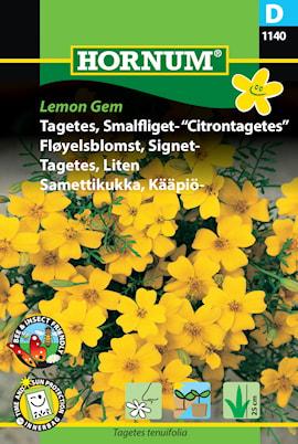 tagetes-liten-lemon-gem-1