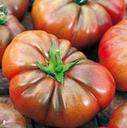 tomat-noir-de-crimee-105cm-kruka-1