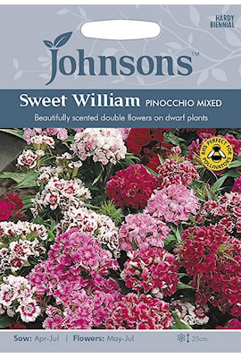 borstnejlika-sweet-william-pinocchio-mixed-1