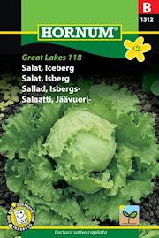 sallad-isbergs--great-lakes-118-1
