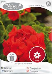 pelargon-lustre-scarlet-red-1