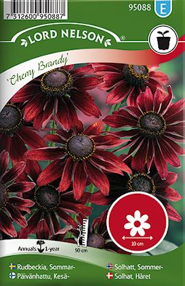 rudbeckia-sommar--cherry-brandy-1