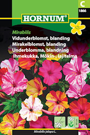 underblomma-mix-mirabilis-1