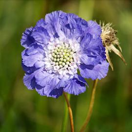 hstvdd-fama-deep-blue-17-19cm-kruka-1