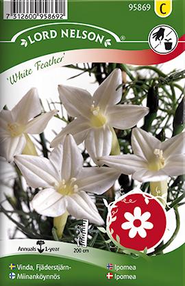 vinda-fjderstjrn--white-feather-1
