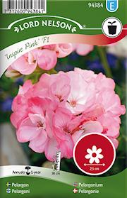 pelargon-inspire-pink-f1-rosa-1