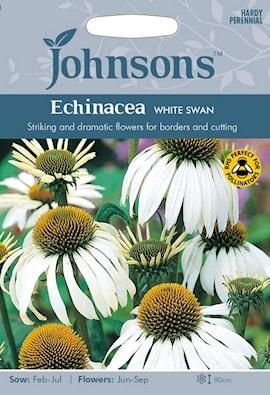 rudbeckia-white-swan-1