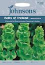 musselsyska-bells-of-ireland--mollucella-1