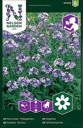 nattviol-trdgrds--violett-1
