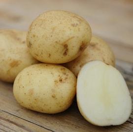 potatis---casablanca-eko-1-kg-1