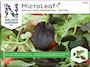 micro-leaf-pak-choi-1